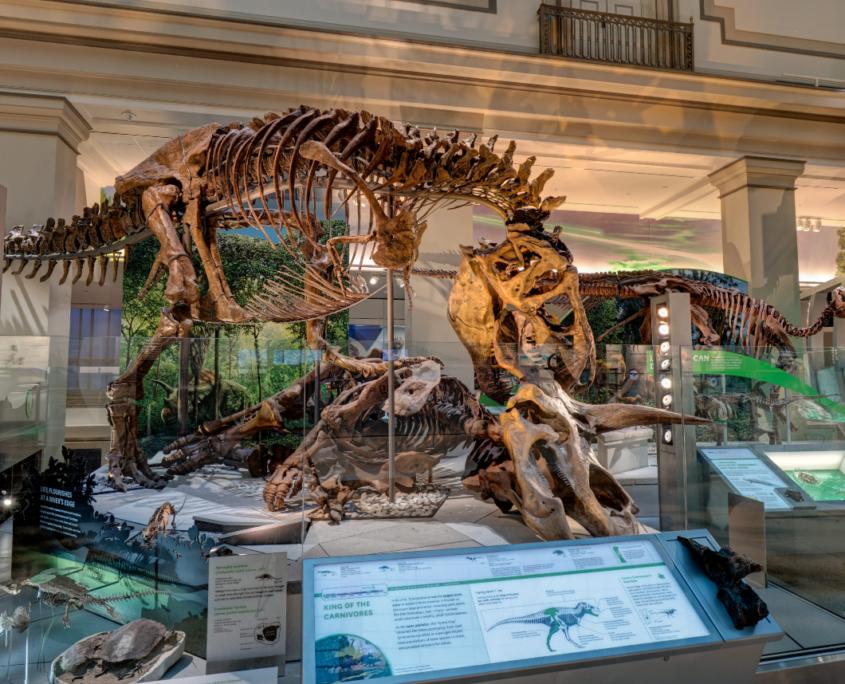 Mit einer Vielzahl von Exponaten bietet das Smithsonian etwas für beinahe alle Fächer. © Smithsonian Institution